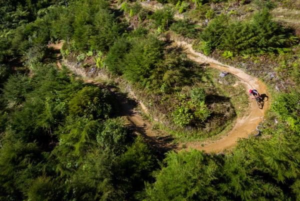 Arapuke Mountain Bike Park