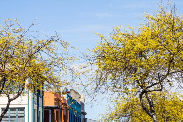 George Street, Palmerston North