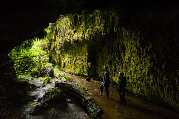 Limestone Creek Reserve Glow Worm Caves