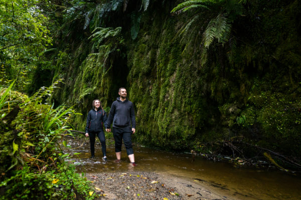Limestone Creek Reserve Glow Worm Caves
